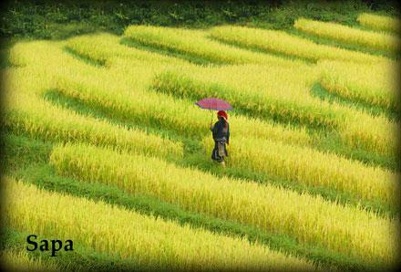 Colorful Vietnam - Thumbnail
