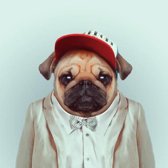*Zoo Portraits動物時尚秀:正經八百時裝篇! 26
