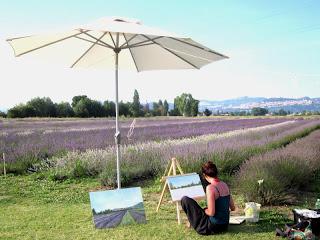 Lavanda pianta vendita Assisi