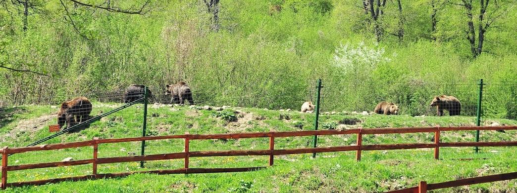Rezervatia de ursi, Zarnesti