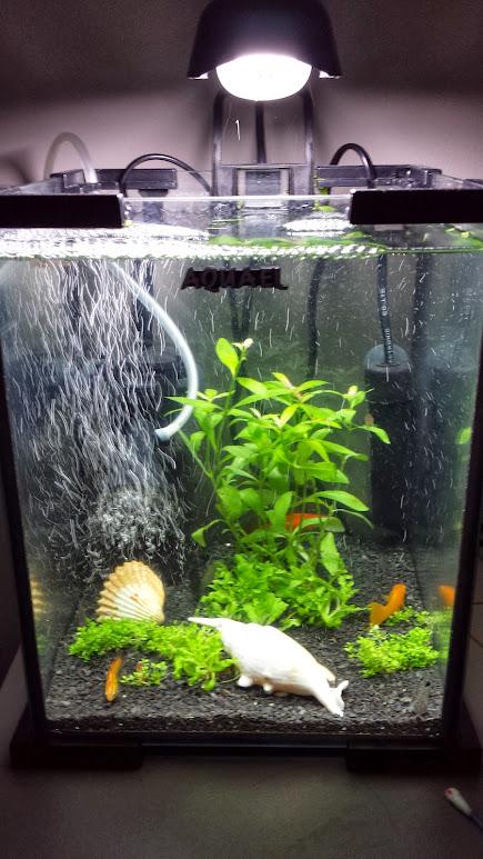 Akwarium 30 L Zupa Rybna