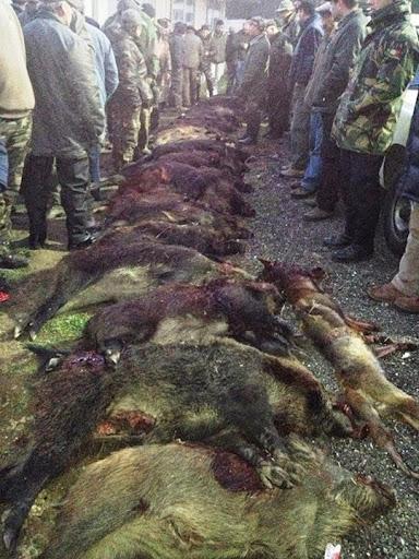 Centena e meia de caçadores participam na Montaria ao Javali