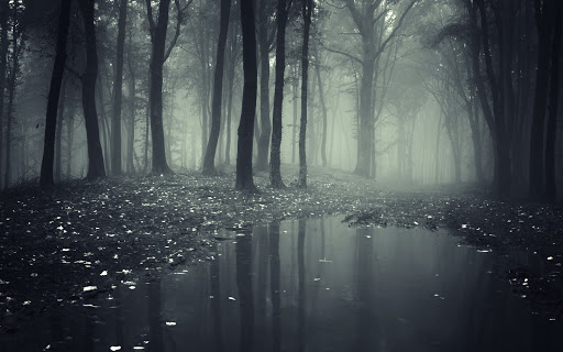 Creepy Dark Forest