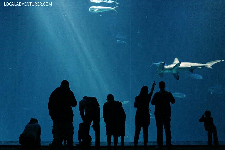 Monterey Bay Aquarium California.