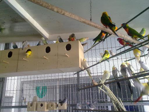 Adopto todo tipo de pájaros, aves  y
