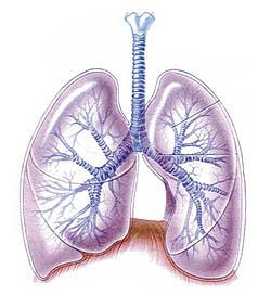 tromboembolismo-pulmonar