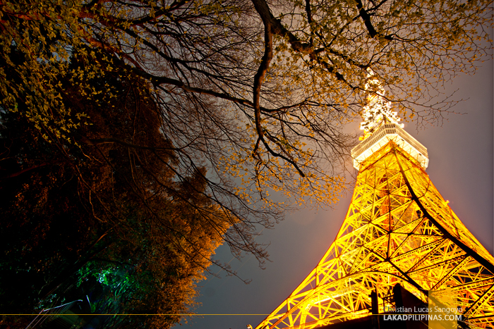 Cherry Blossoms and Japan's Iconic Tokyo Tower