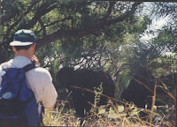 Caminando ante elefantes por la orilla del Zambeze