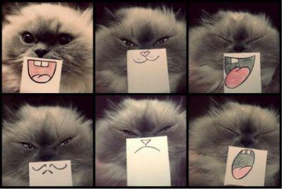Как узнать сколько лет кошке в переводе на человеческие