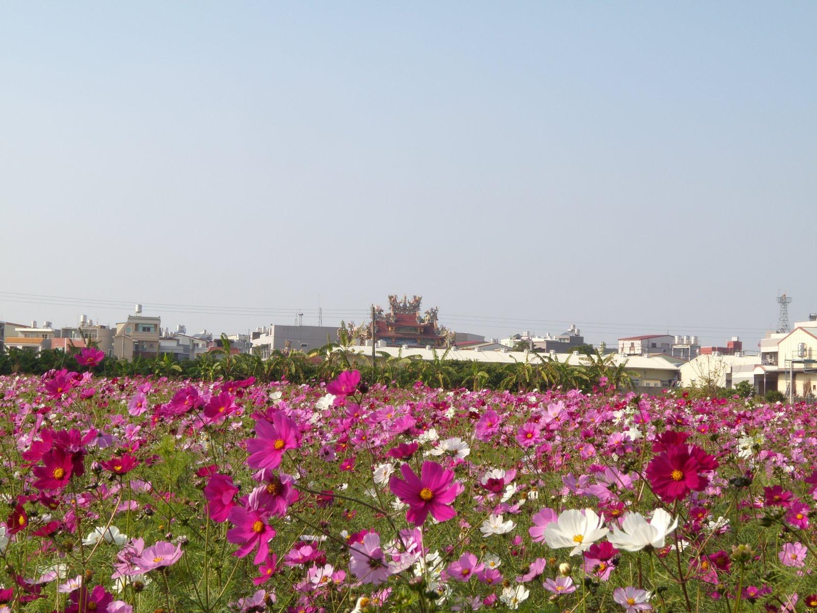 gadget made in taiwan champs de fleurs roses la fac. Black Bedroom Furniture Sets. Home Design Ideas