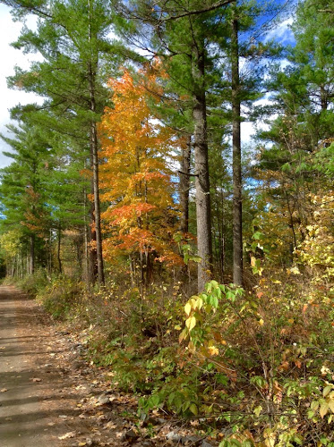Walking the woods roads near Bonnechere Provincial Park