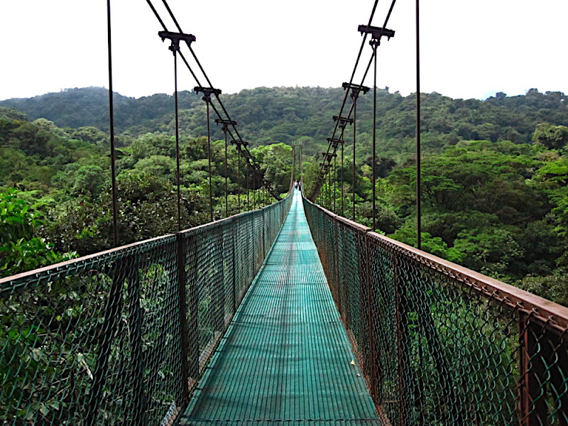 Hanging Bridge in Monte Verde