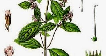Le blog un r pulsif fourmis araign es et gu pes - Repulsif fourmi huile essentielle ...