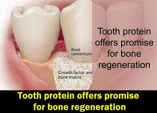 Tooth-protein