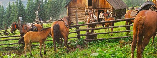 cabaña de pastores en los cárpatos
