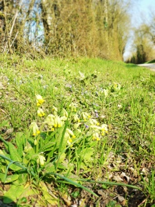 french village diaries silent sunday spring wildflowers