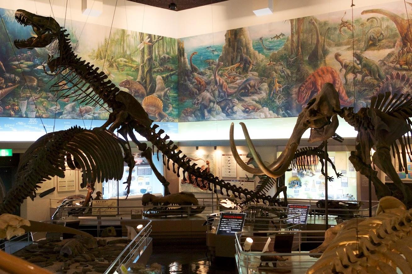 恐竜たちの骨格標本