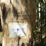 Graffiti on a tree in the Blackbutt Reserve (400300)