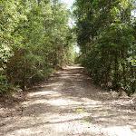 Dense forest along Wild Boar Road (364451)