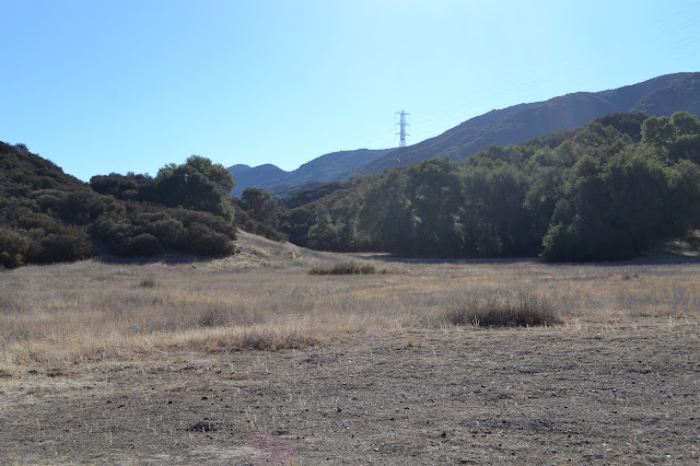 Cottam Meadow