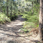 Walking along the trail (238598)