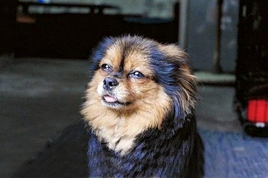 Chó và những câu chuyện để suy ngẫm-5