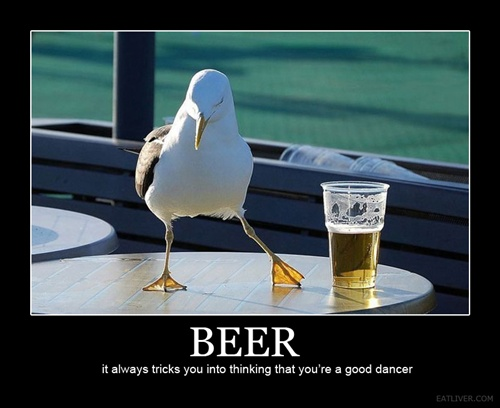 photo of a seagull dancing by a glass of beer