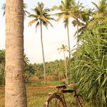 Kerala, Varkala