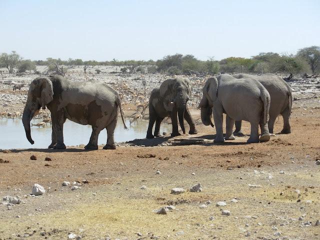 أفضل ما في أفريقيا  Best of Africa Namibia_180807113903