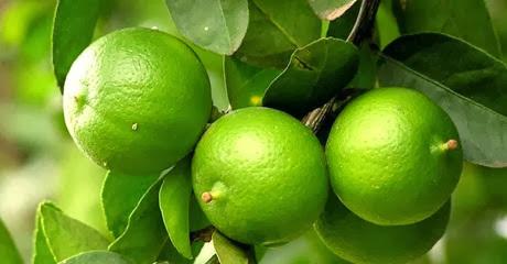 kegunaan jeruk nipis