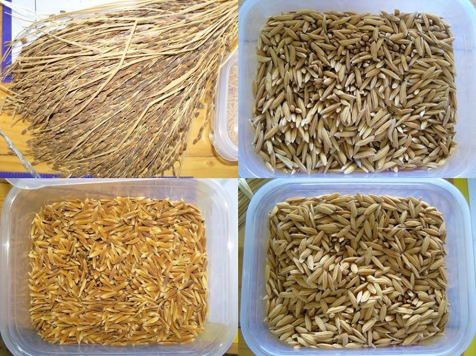 เที่ยวงานมหัศจรรย์พันธุกรรมไทย ที่พิพิธภัณฑ์เกษตรเฉลิมพระเกียรติฯ คลองหลวง ปทุมธานี