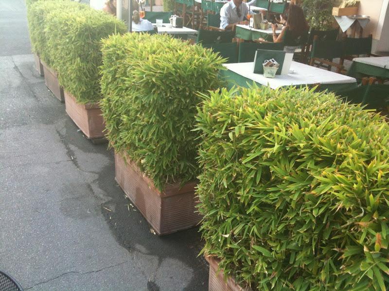 Un quadrato di giardino forum di giardinaggio un quadrato di giardino - Siepe in vaso terrazzo ...