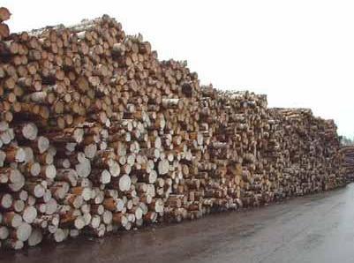 Tìm hiểu về một số loại gỗ chuyên làm nội thất