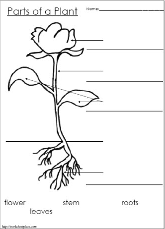 http://www.homeschoolhelperonline.com/worksheets/label_parts_plant ...