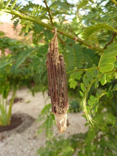 Quelques macros d'insectes - Page 4 P1030497