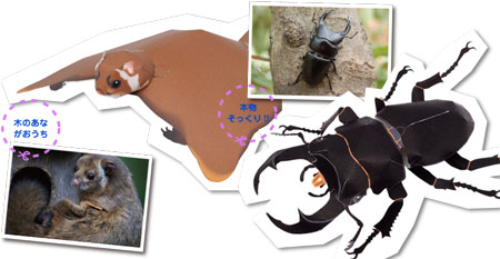 Flying Squirrel Papercraft Stag Beetle