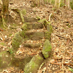 Stone steps on the track to Gap Creek Falls in the Watagans (323717)