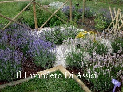 Progetti giardini online gratis progetti giardini privati progetti piccoli giardini privati - Piante mediterranee da giardino ...