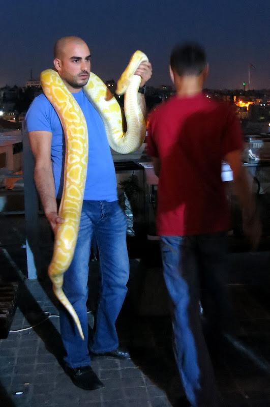 Python at street festival