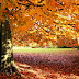 Outono começa na noite deste domingo