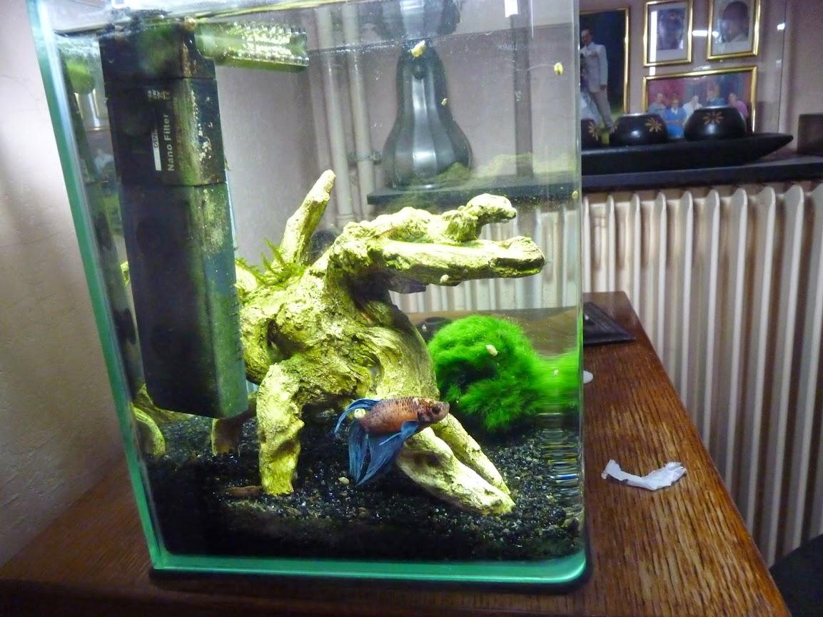 Ma petit histoire Aquariophile de 2009 à aujourd'hui  P1060140