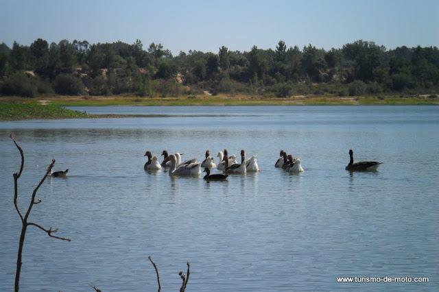 Salvaterra de Magos, Barragem de Magos, Ribatejo