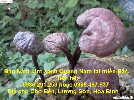 NAM LIM XANH