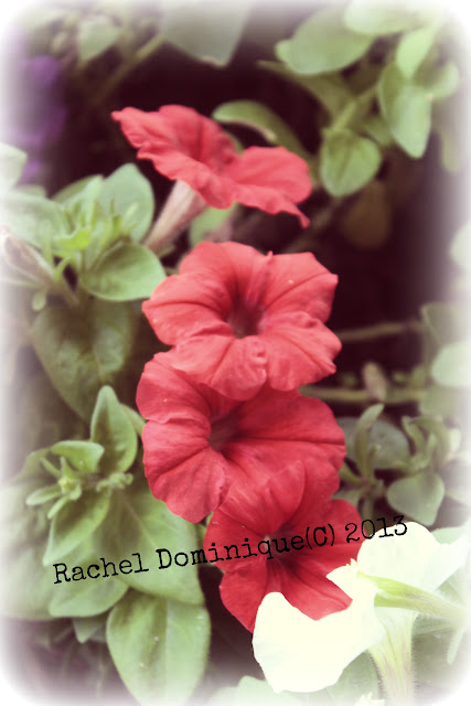 A red bloom