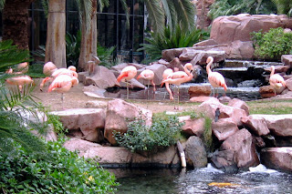 Wildlife Habitat at the Flamingo Hotel and Casino