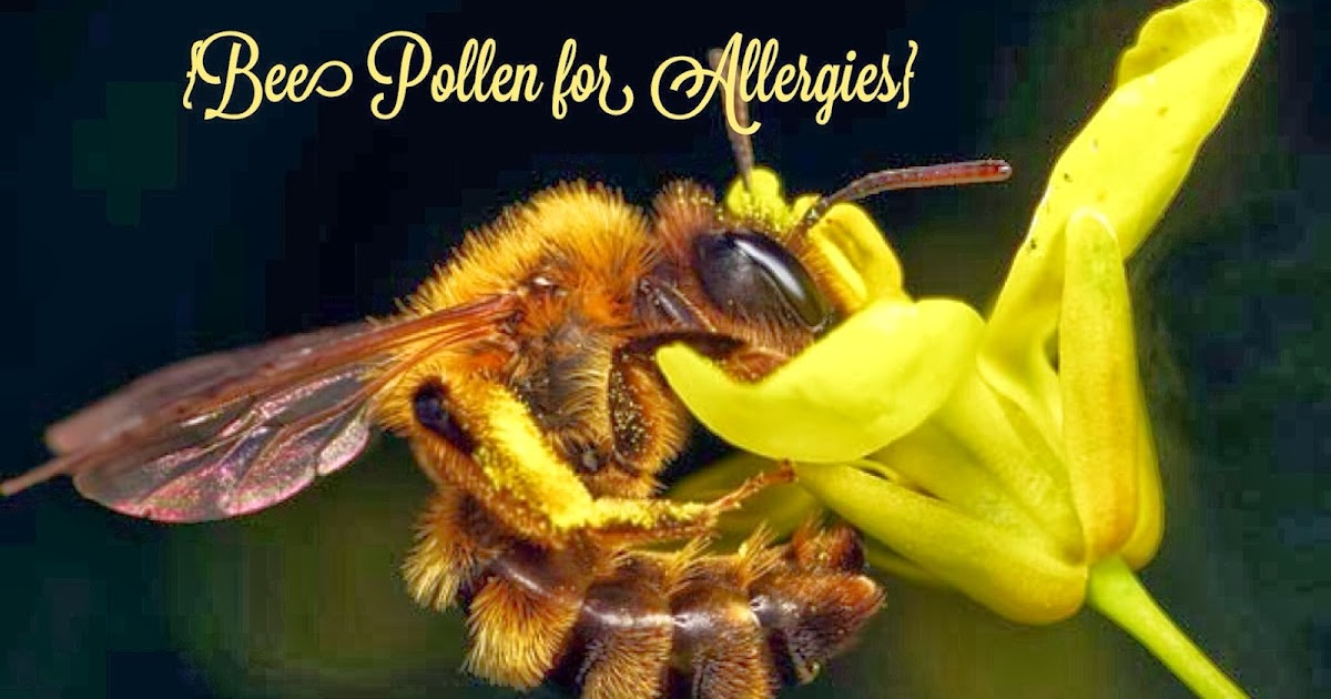 {Fully Nourished}: How to use Bee Pollen for Allergies