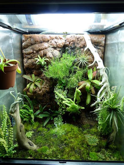 Decor de fond terrarium tropical - Decor fond terrarium desertique ...