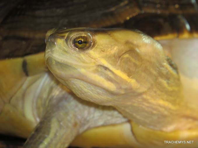 mes tortues (BK) - Page 10 IMG_2160