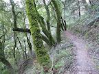 Razorback Ridge Trail