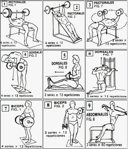 Tu cuerpo en forma rutinas de ejercicios para principiantes for Rutinas gimnasio